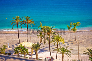 Palm and sand beach im Menton on French Riviera
