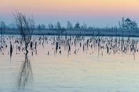 winter sunrise in a German marsh