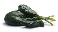 Spinach (Spinacia oleracea) leaves; paths