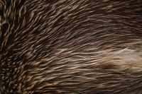 Bear Fur Background
