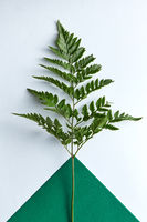 Fresh twig fern on a double dark green and gray background with copy space. Natural composition as a layout. Flat lay