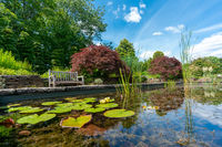 formal garden pond with water lilies and a park bench