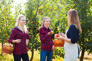 Apple orchard and openspace market on the farm
