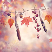 Autumn composition on colorful background