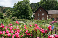 colorful cottage garden in front of old farmhouse