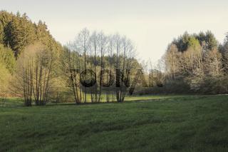 Steinachtal im Odenwald