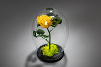 Yellow eternal rose under the glass dome