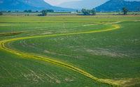 green farm lands in summer in montana