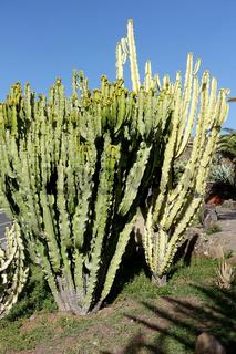 Vegetation auf La Gomera, Spanien