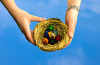 Seven dyed eggs in a small wicker nest in hands on a blue background