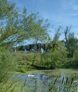 Naturschutzgebiet Urdenbacher Kaempe in Duesseldorf-Urdenbach,NRW,Deutschland