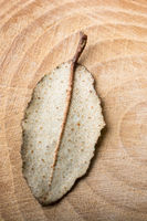 Dry green leaf on a a piece of wood