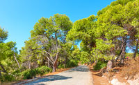 Road through the pine forest in Aegina