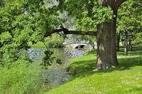 Beautiful old oak near lake with ducks - picturesque summer landscape