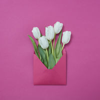 White tulips in an envelope on a purple background.
