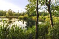 Walenhoek, Niel, Belgium:  Beautiful small lake at golden hour