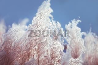fluffy cotton like plant on blue sky
