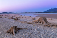 Tree stump in dry lake Forggensee after sunset