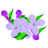 Vector illustration of purple and violet lilac flowers with green leafs on white background.
