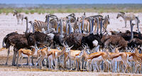 Full house at the waterhole, Etosha National Park, Namibia