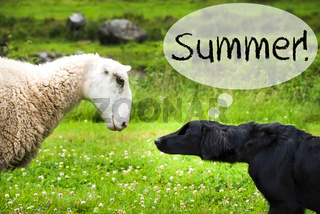 Dog Meets Sheep, Text Summer, Wild Nature