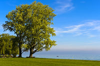 Park with tree at Lake Constance, Arbom , Switzerland