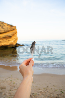 Girl holds a feather of a bird in the background of the sea. Beautiful sunset