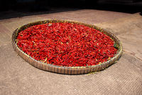 A basket of freshly picked red chillies left out to sun dry.