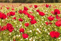 Early spring in Israel