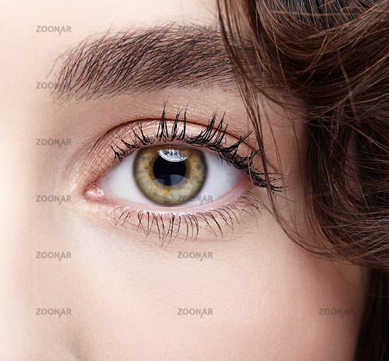 Female eye zone and brows with day nude makeup