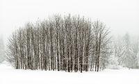 Winter scenery in Vogtland