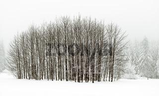 Winterlandschaft im Vogtland