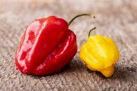 rote und gelbe Habanero Chilis auf Holz