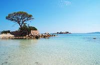 Pine - Palombaggia - Tamaricciu - Corsica