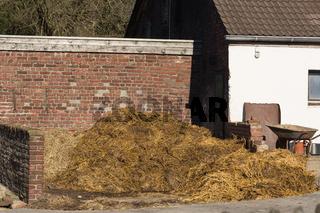 Piles of stinking manure