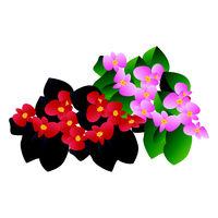 Mohit-Batch-5-Flower_Begonia_07.eps
