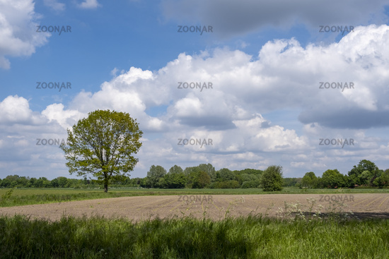Spring in Muensterland
