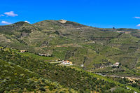 Vineyards in the port wine region Alto Douro near Pinhao, Douro Valley, Portugal