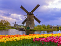 Windmills and flowers in Netherlands