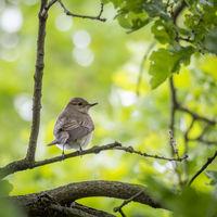 Sparrow in wild life