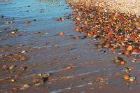 coastal strip, wave rolls on the stones, wet sea stones