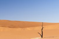 Dune with acacia tree in the Namib desert, Namibia, Africa.
