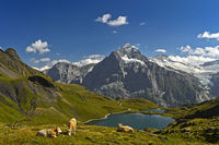 Mountain lake Bachalpsee and the peak Wetterhorn behind, Grindelwald, Bernese Oberland, Switzerland