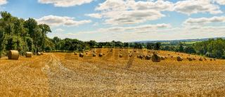 Landschaft Panorama Hintergrund mit Feld im Sommer