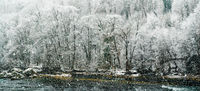 winter forest and river landscape with heavy snowfall