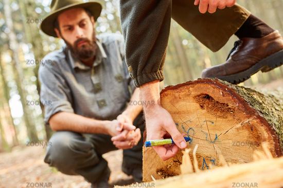 Waldarbeiter markiert einen gefällten Baum