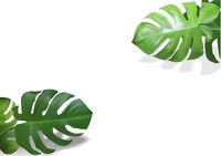 Monstera Leaves Plant Background