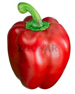Yolo wonder sweet bell pepper, red