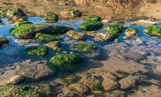 Green algae on the rocks at the edge of the sea
