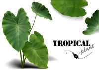 Tropical Leaves Photorealistic Set